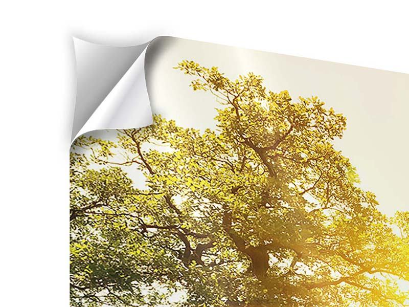 Klebeposter 5-teilig Sonnenuntergang in der Natur