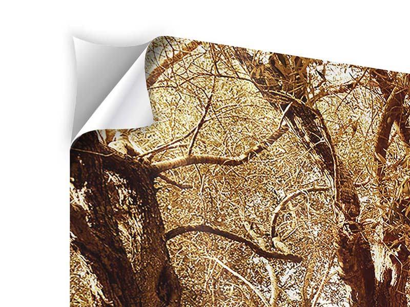 Klebeposter 5-teilig Olivenbäume im Herbstlicht