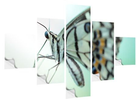 Klebeposter 5-teilig Schmetterling XXL