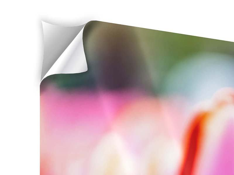 Klebeposter 5-teilig modern Pretty in Pink