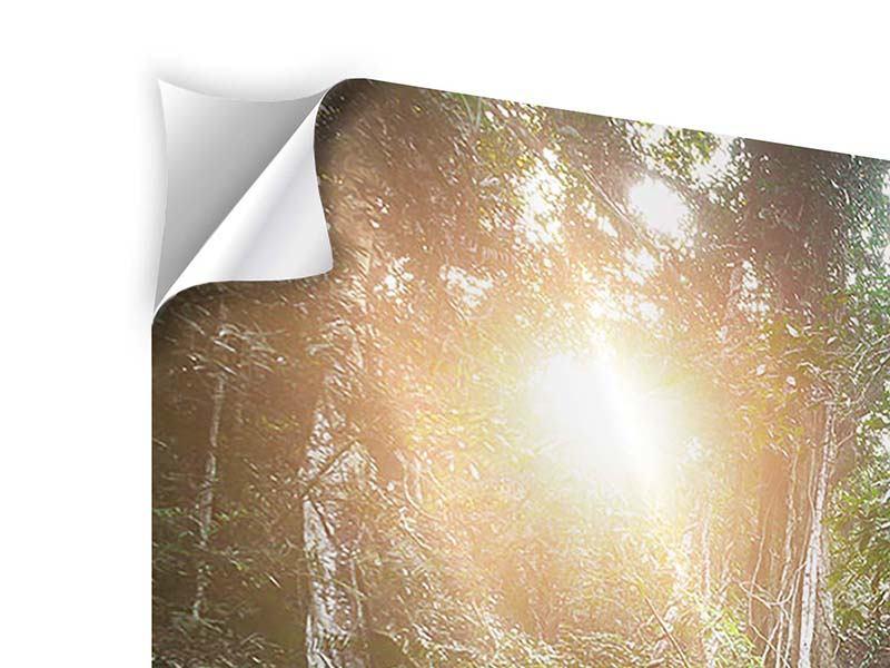 Klebeposter 5-teilig modern Naturschauspiel