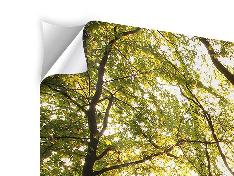 Klebeposter 5-teilig modern Sonnenuntergang zwischen den Bäumen