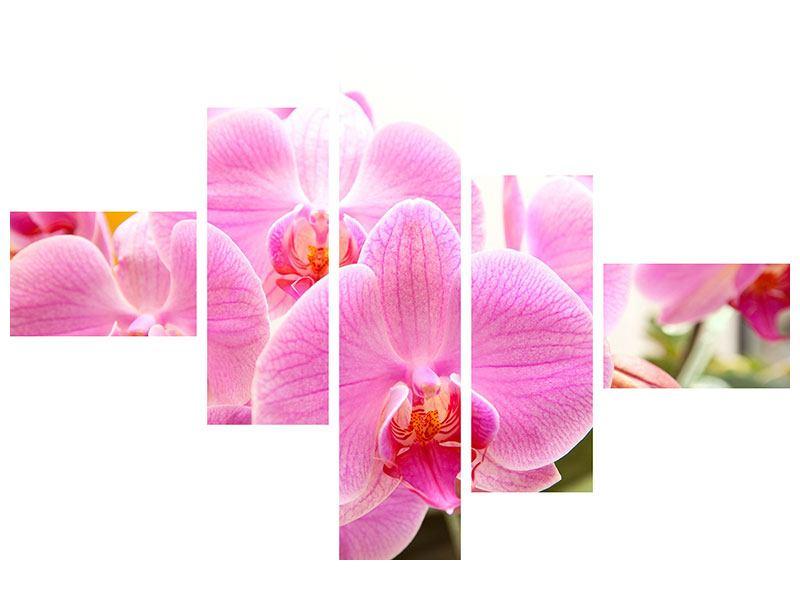 Klebeposter 5-teilig modern Königliche Orchideen