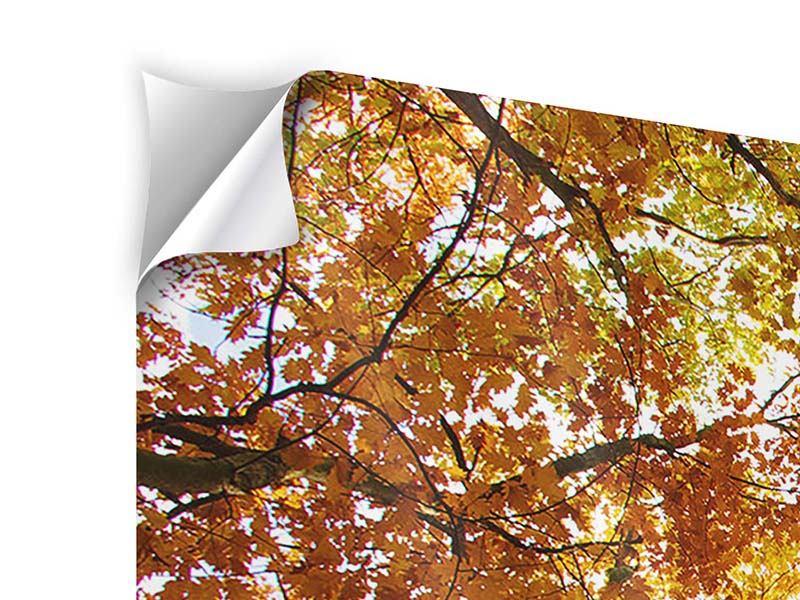 Klebeposter 5-teilig modern Herbstbäume