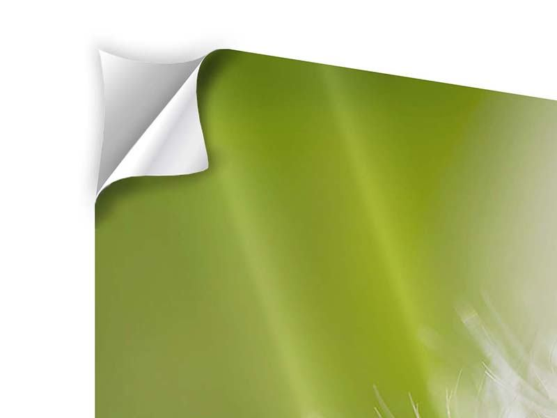 Klebeposter 5-teilig modern Pusteblume Löwenzahn