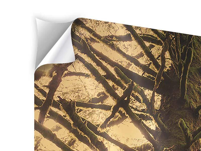 Klebeposter 5-teilig modern Sonnenuntergang im Dschungel