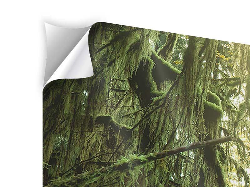 Klebeposter 5-teilig modern Verträumter Wald