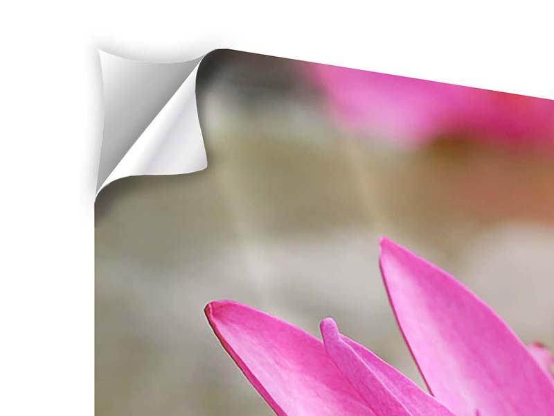 Klebeposter 5-teilig modern Sonnige Seerose