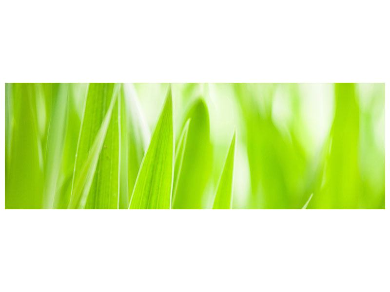 Leinwandbild Panorama Gras XXL
