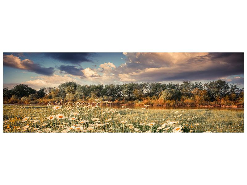 Leinwandbild Panorama Die Wiesenmargerite am Fluss