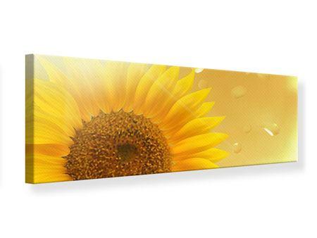 Leinwandbild Panorama Sonnenblume im Morgentau