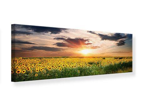 Leinwandbild Panorama Ein Feld von Sonnenblumen