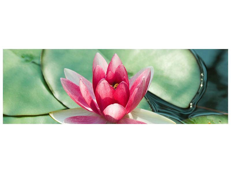 Leinwandbild Panorama Der Frosch und das Lotusblatt