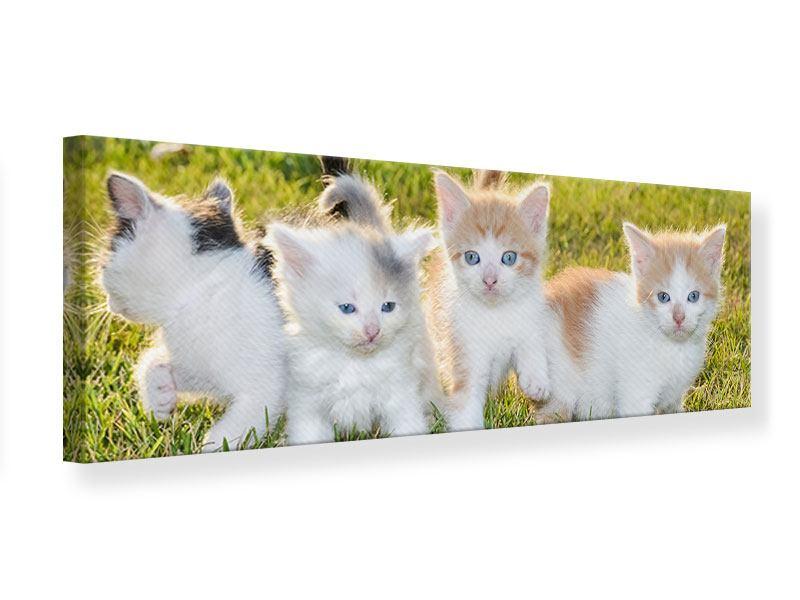 Leinwandbild Panorama Katzenbabys