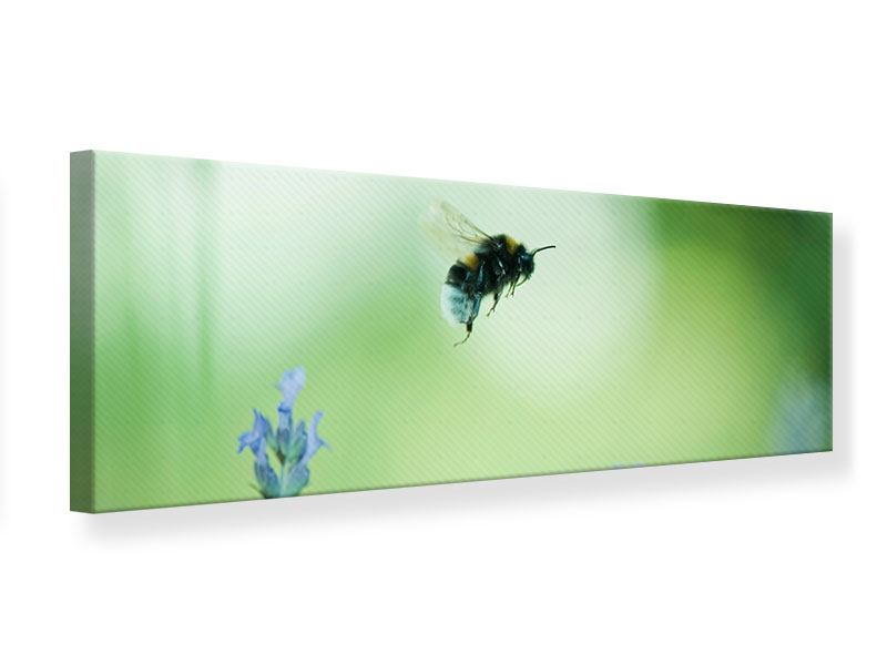 Leinwandbild Panorama Die Biene