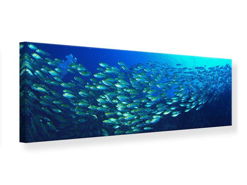 Leinwandbild Panorama Fischschwarm