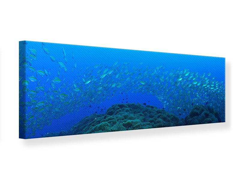 Leinwandbild Panorama Fischschwärme