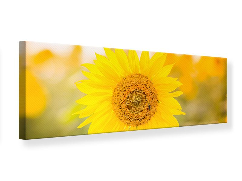 Leinwandbild Panorama Sunflower
