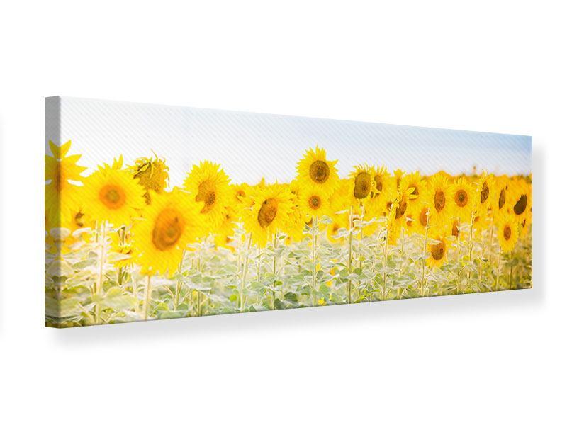 Leinwandbild Panorama Im Sonnenblumenfeld