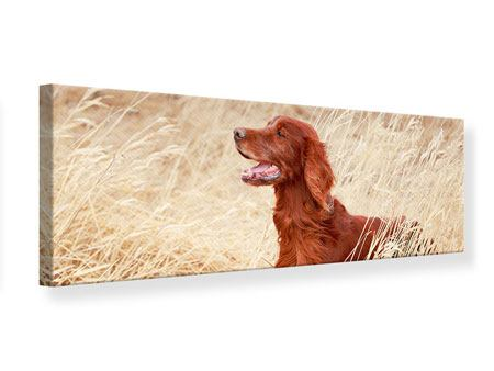 Leinwandbild Panorama Irish Red Setter