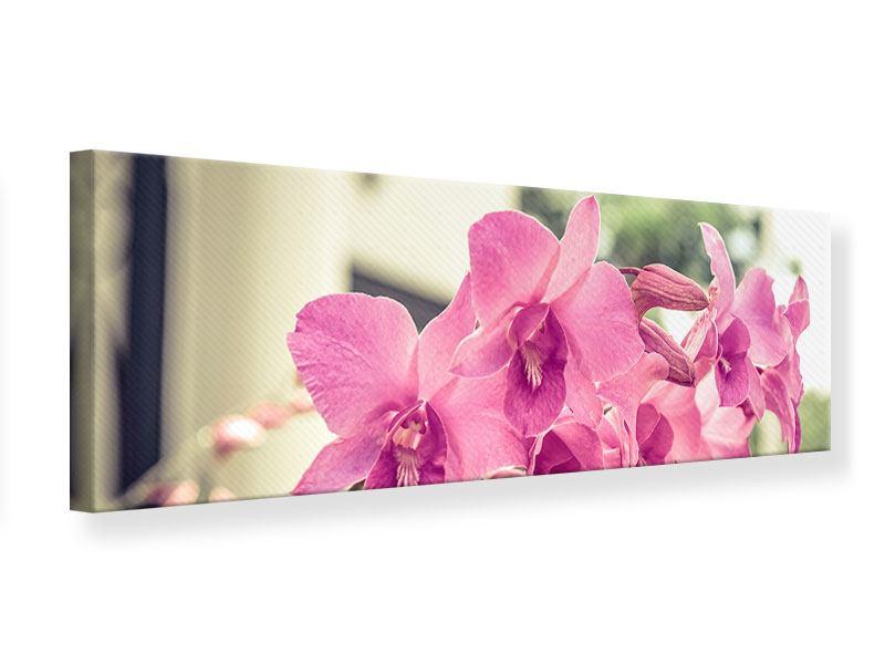 Leinwandbild Panorama Ein Fensterplatz für die Orchideen