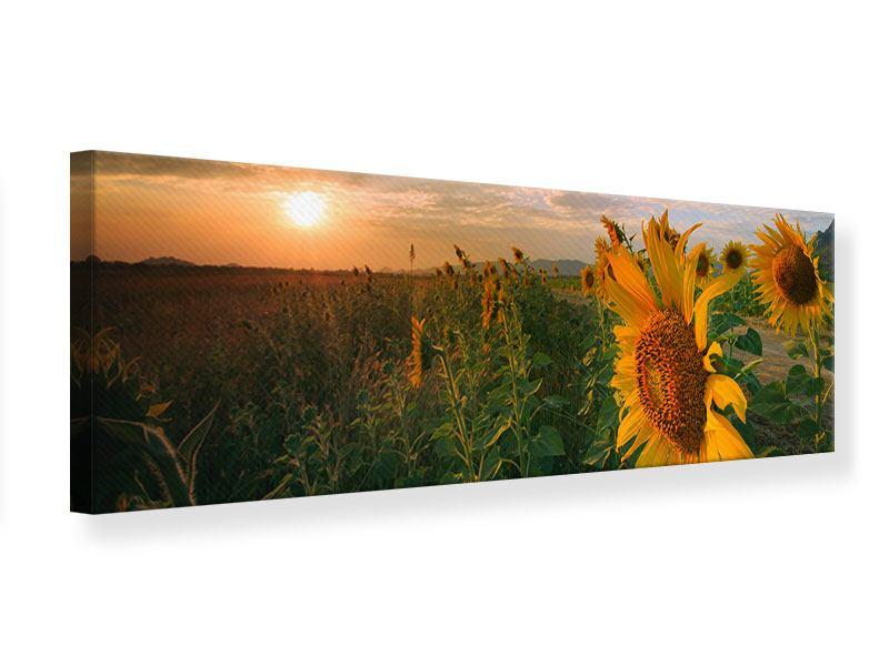 Leinwandbild Panorama Sonnenblumen im Lichtspiel