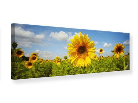Leinwandbild Panorama Sommer-Sonnenblumen