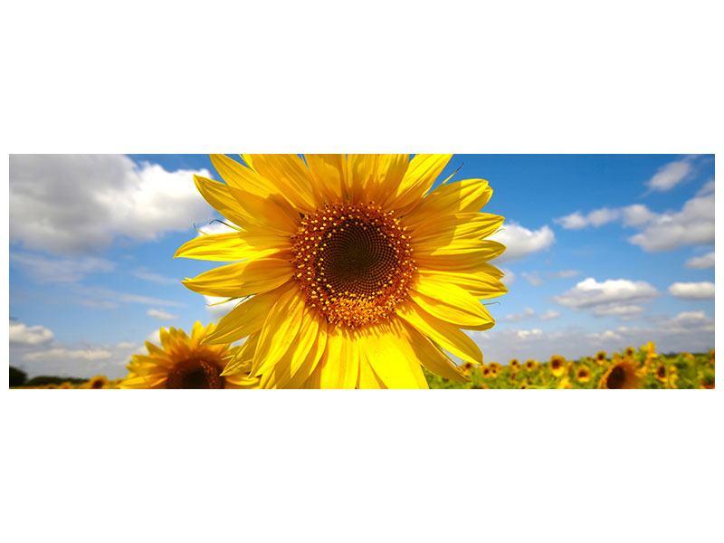 Leinwandbild Panorama Das Feld der Sonnenblumen