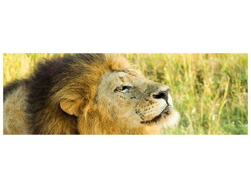 Leinwandbild Panorama Der König der Tiere