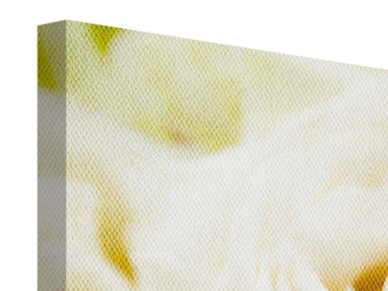 Leinwandbild Panorama Trauringe auf Rosen gebettet