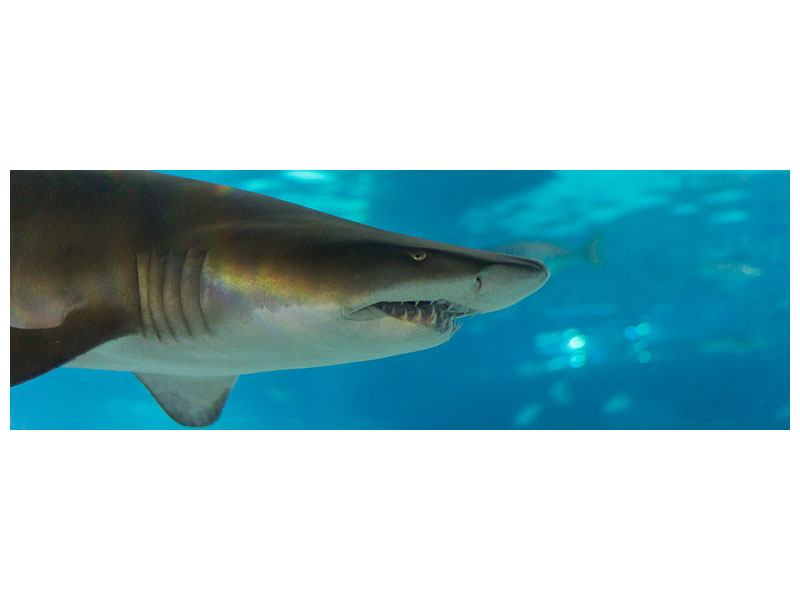 Leinwandbild Panorama Der Haifisch