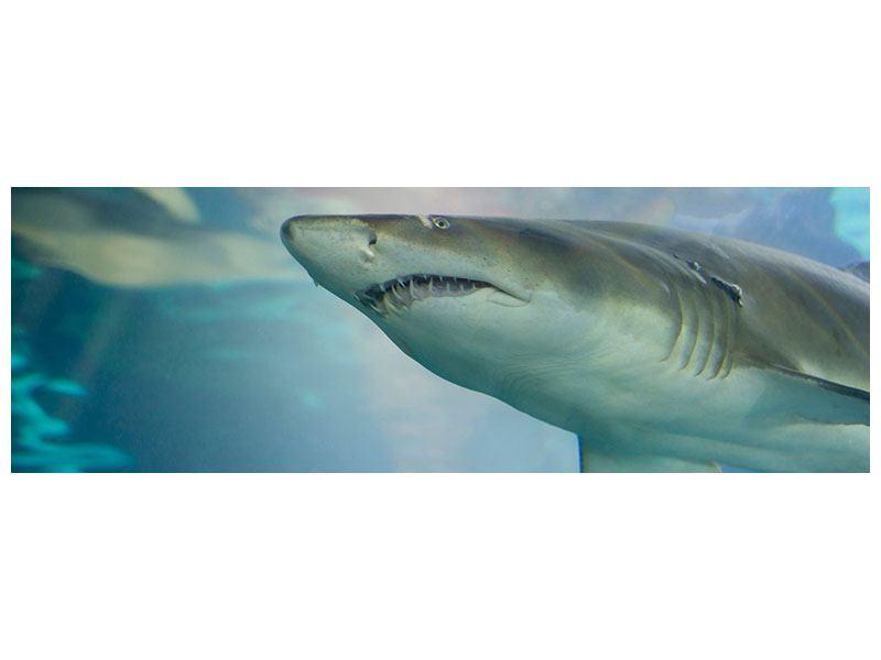 Leinwandbild Panorama Hai