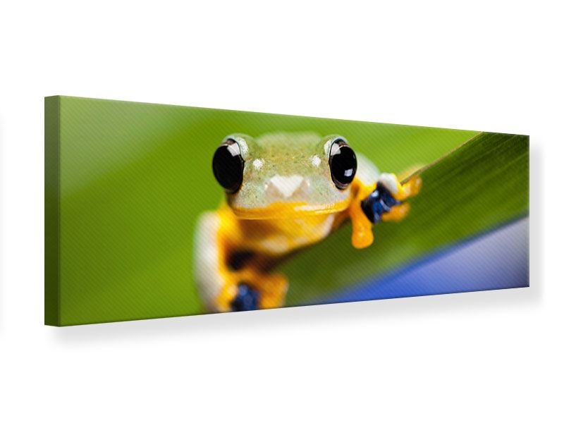 Leinwandbild Panorama Frosch XXL