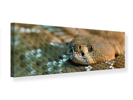 Leinwandbild Panorama Viper
