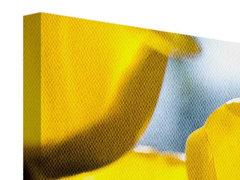 Leinwandbild Panorama Gelbe Tulpen in XXL
