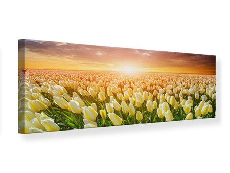 Leinwandbild Panorama Sonnenaufgang bei den Tulpen