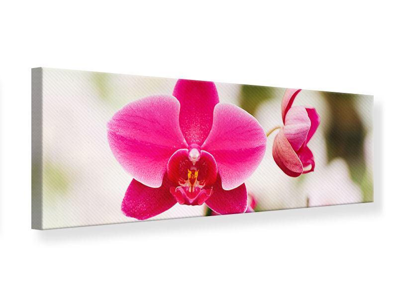Leinwandbild Panorama Perspektivische Orchideen