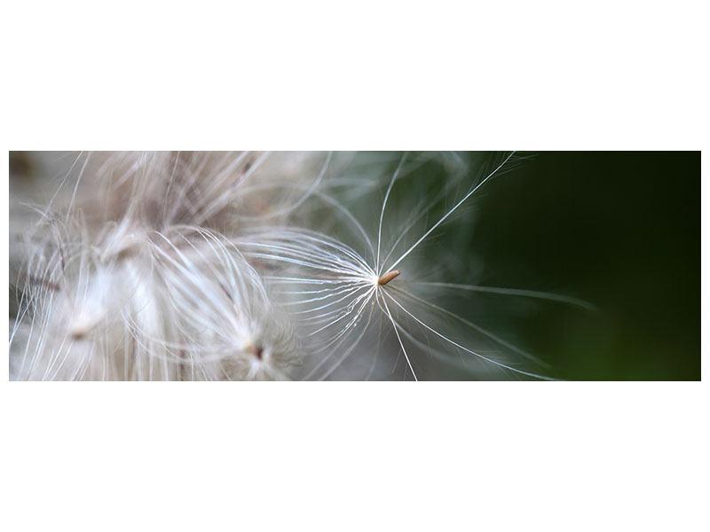 Leinwandbild Panorama Close up Blütenfasern