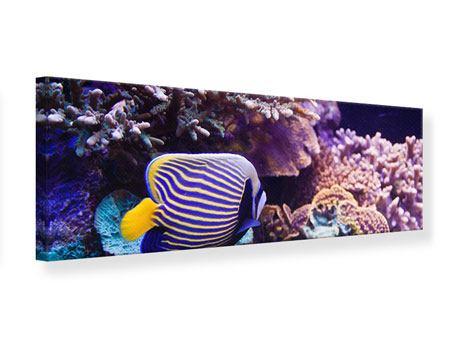 Leinwandbild Panorama Faszination Unterwasser