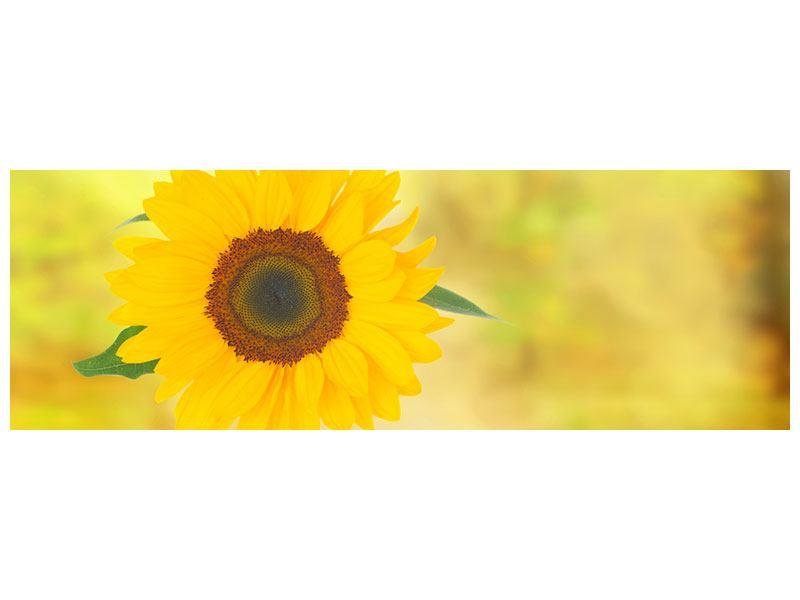 Leinwandbild Panorama Die Sonnenblume