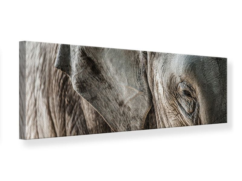 Leinwandbild Panorama Close Up Elefant