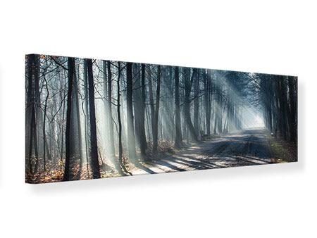 Leinwandbild Panorama Wald im Lichtstrahl