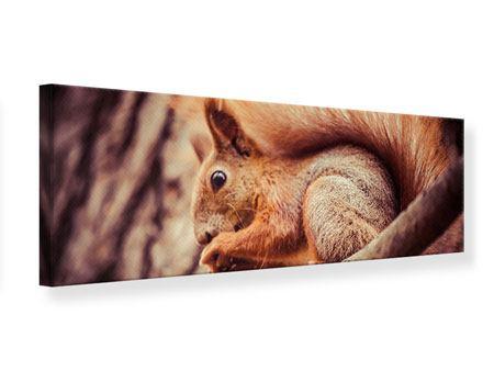 Leinwandbild Panorama Eichhörnchen