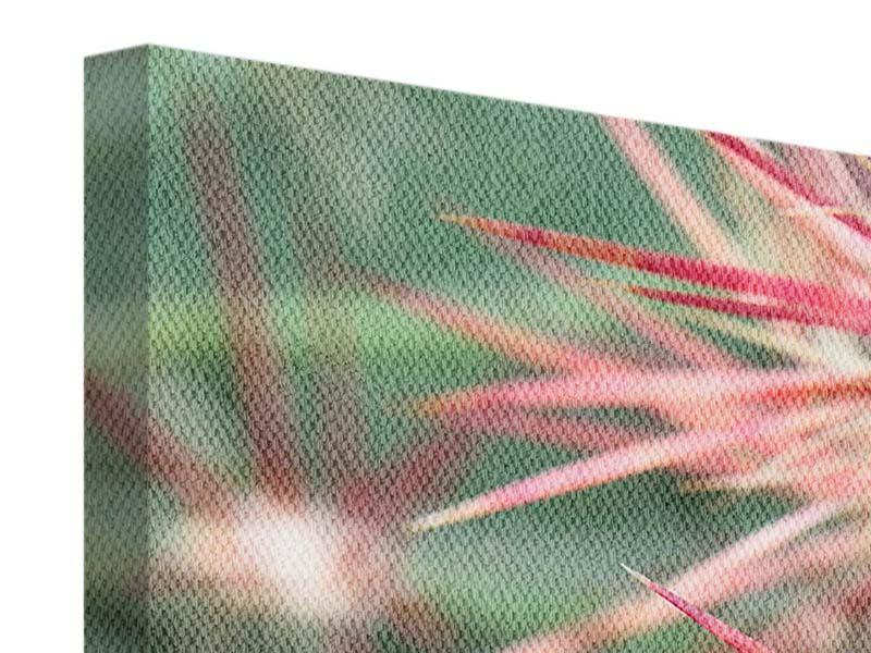 Leinwandbild Panorama Die Kaktusblüte