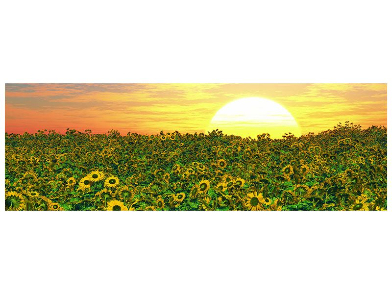 Leinwandbild Panorama Blumenpanorama bei Sonnenuntergang