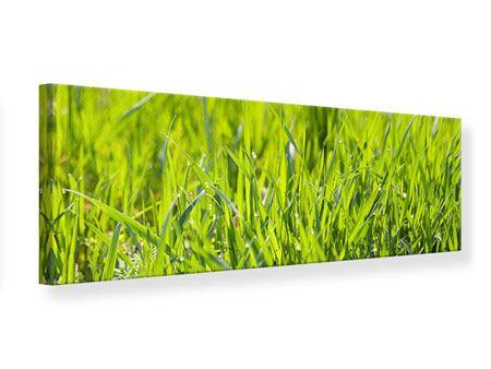 Leinwandbild Panorama Gras im Morgentau