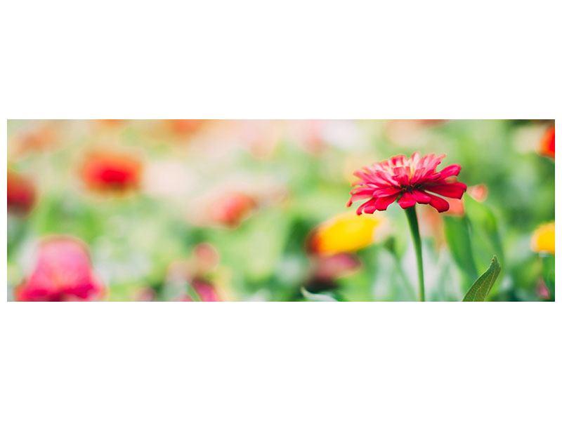 Leinwandbild Panorama Im Blumengarten