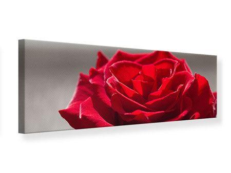 Leinwandbild Panorama Rote Rosenblüte