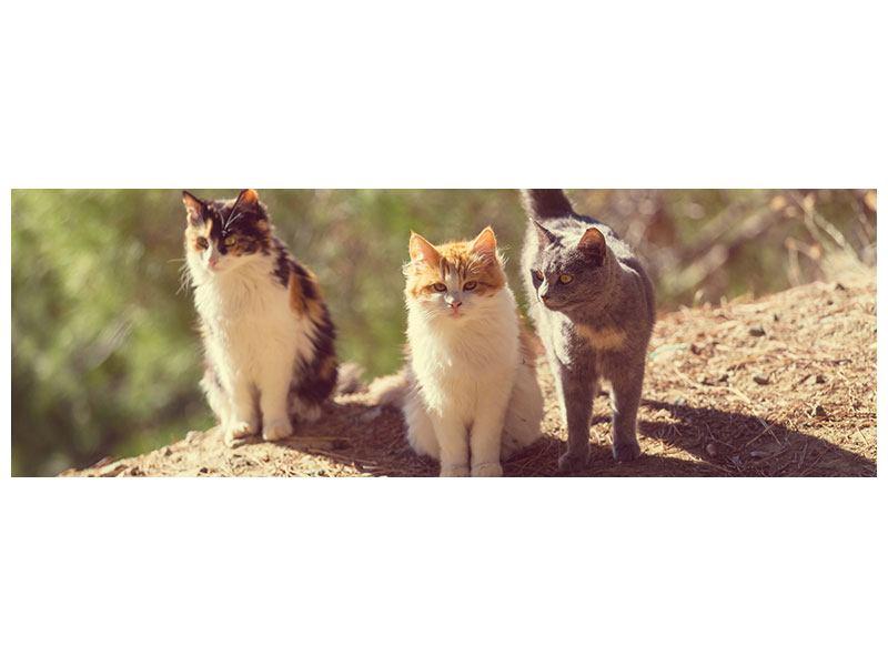 Leinwandbild Panorama Katzen im Garten