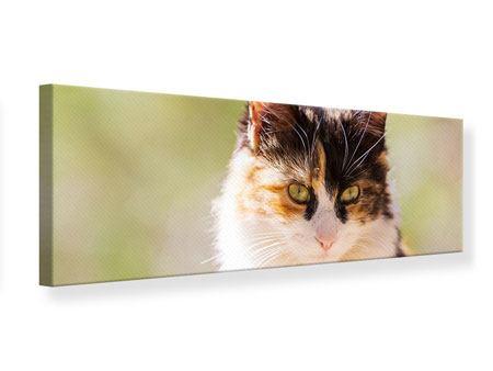 Leinwandbild Panorama Katzenbesuch